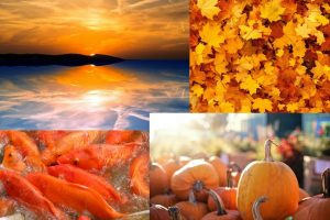 Color of the month: orange – meaning and symbolism